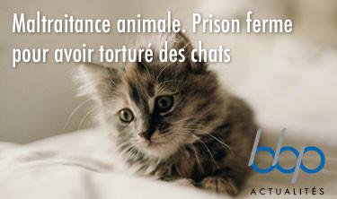 Maltraitance animale. Prison ferme pour avoir torturé des chats