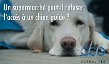 Un supermarché peut-il refuser l'accès à un chien guide?