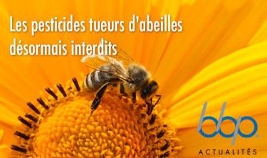 Les pesticides tueurs d'abeilles désormais interdits